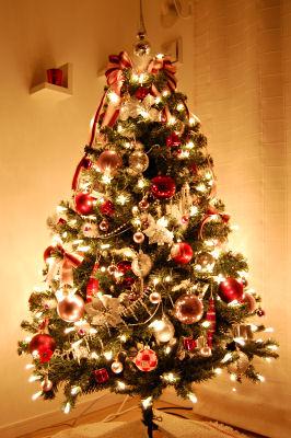 クリスマスツリーの画像 p1_10