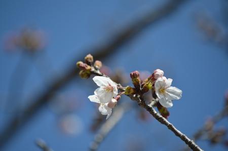 桜 先端 D1500
